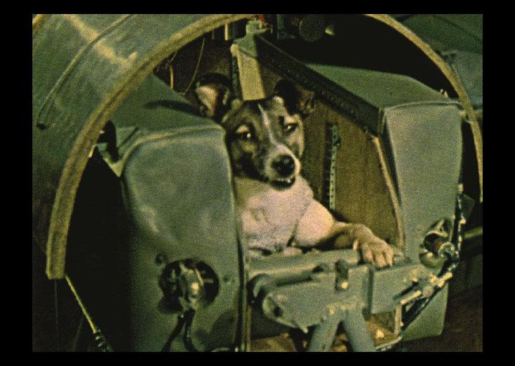 Laika the dog
